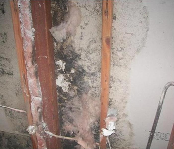 Mold Remediation in a Colorado Springs House Before