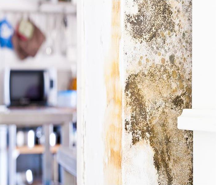 Mold Remediation The First Steps Of Mold Remediation In Your Colorado Springs Residence