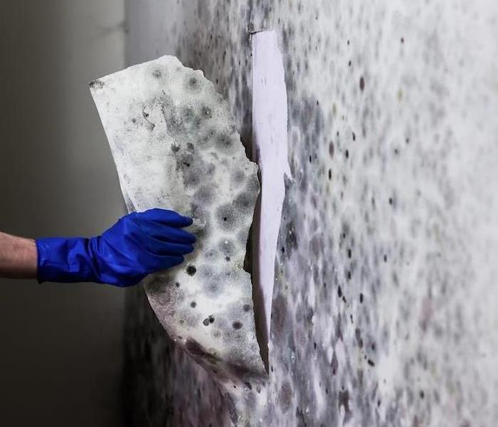 Mold Remediation Bleach is Not the Best Option to Fix Mold Damage in Colorado Springs