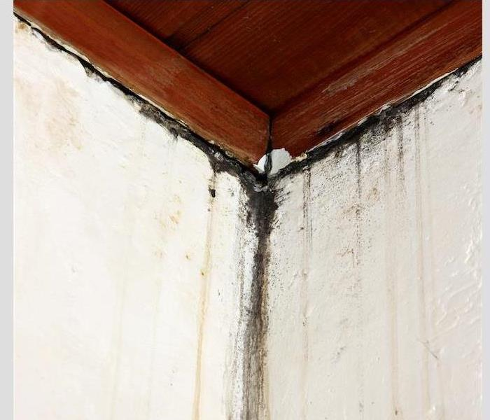 Cleaning and Removing Mold Damage in Colorado Springs