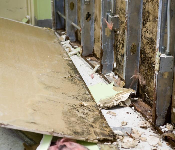 Mold Remediation Halting Mold Damage in Colorado Springs