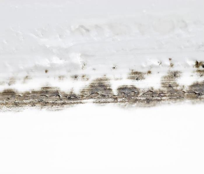 Mold Remediation 4 Steps To Deal With Mold Damage In Colorado Springs
