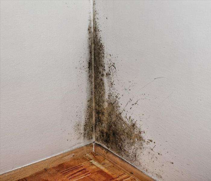 Mold Remediation Mold Damage Experts in Colorado Springs Discuss Microbes and Water Damage